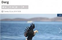 RTE_Eagle